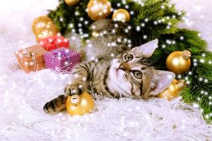 macska-karacsony-fa-alatt